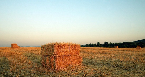 Φορολογούνται και τα αγροτεμάχια;