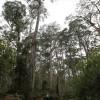 Απώλεια του μισού πληθυσμού των δέντρων της Γης